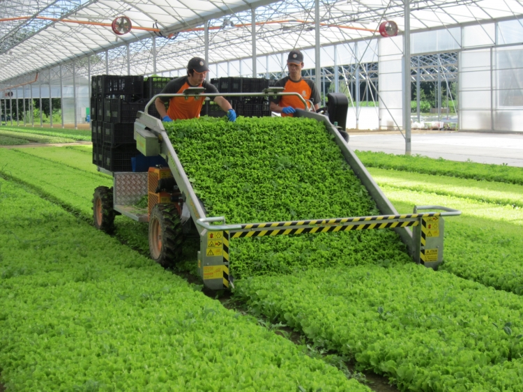 Greens Harvester Machine Pictures To Pin On Pinterest